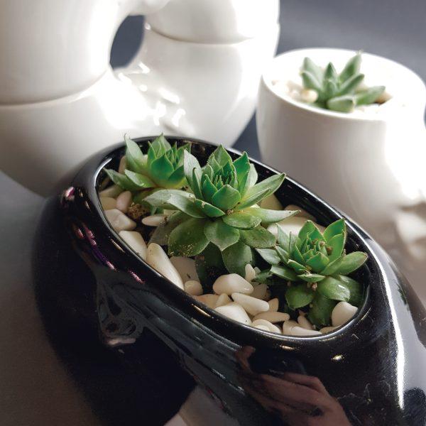 inseparable ceramica marca tuio diseño mexicano plantas cactus suculentas
