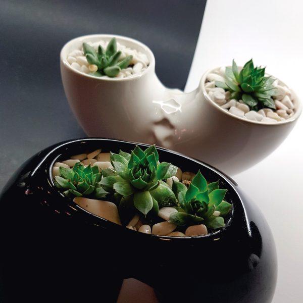 inseparable ceramica marca tuio diseño mexicano