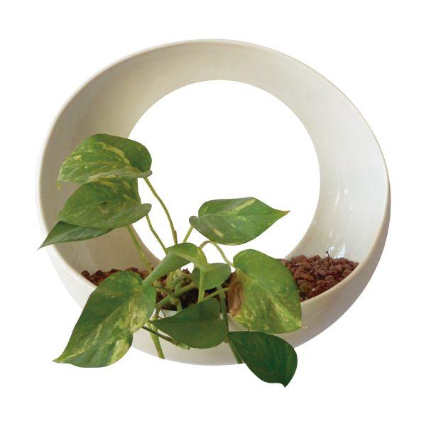 luna de ceramica marca tuio diseño mexicano contenedor de pared plantas maceta muro verde