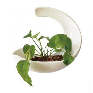 luna de ceramica marca tuio diseño mexicano contenedor de pared muro verde maceta plantas cactus suculentas