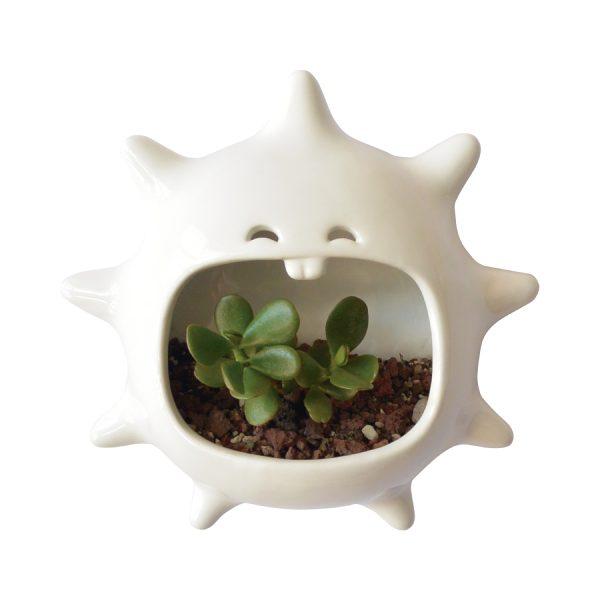 mega comelon erizo de ceramica marca tuio diseño mexicano plantas suculentas cactus