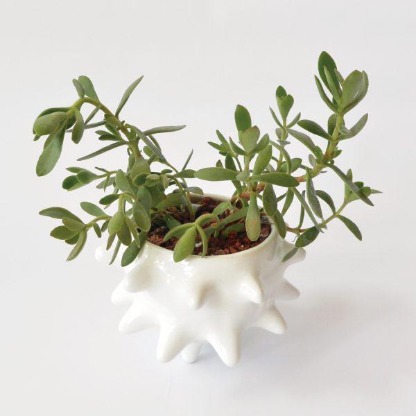 tazon erizo de ceramica marca tuio diseño mexicano plantas cactus suculentas