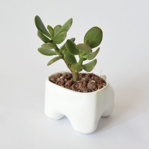 tazon huella de ceramica marca tuio diseño mexicano regalo corporativo
