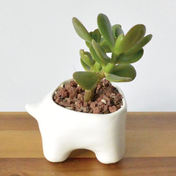 tazon huella de ceramica marca tuio diseño mexicano maceta plantas suculentas cactus